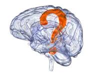brain_180
